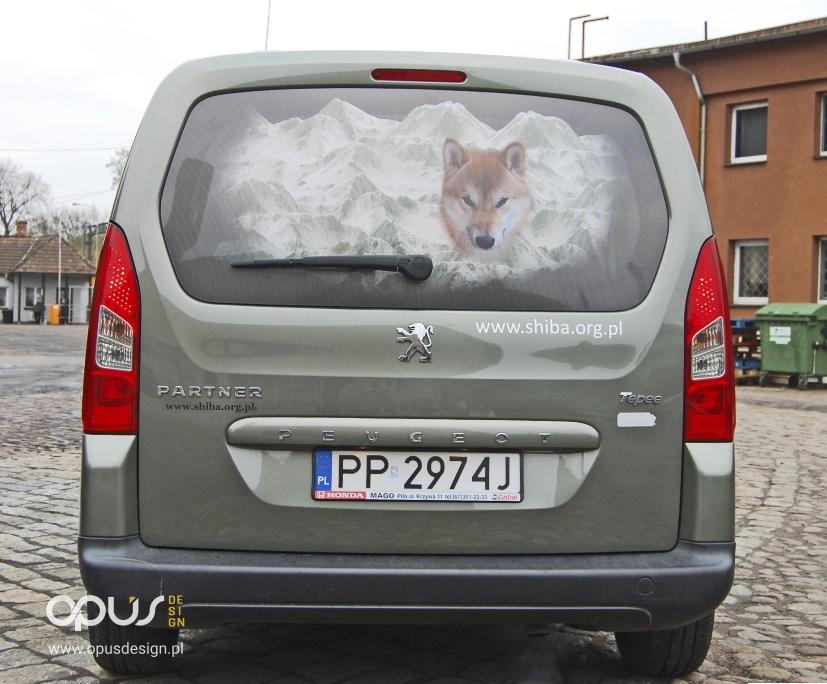 shiba inu hodowla reklama na samochodzie